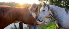 How to use essential oil for horses via self-selection, includes essential oils and other aromatics commonly used for horse health and behaviour