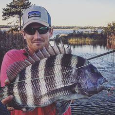 Amazing fish on the fly a sheepshead at my crab pattern in shallow water. I watched the fish change from dormant to exited as it turned its head up off of the bottom and surfed the fly. Fish of a lifetime on the fly rod Surf Fishing, Fishing Life, Going Fishing, Saltwater Fishing, Trophy Fish, Mind Relaxation, Small Fish, Fly Rods, Red Fish