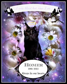 Famous Homer the blind, black cat has a new book out and his legacy continues.