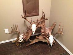 images about Deer mounts Deer Mount Decor, Deer Decor, Skull Decor, Taxidermy Decor, Taxidermy Display, Deer Horns, Deer Skulls, Deer Hunting Decor, Bear Mounts