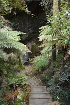 Image detail for -New Zealand, North Island, between Rotorua and Taupo, Orakei Korako Thermal Area, Path to Ruatapu Cave