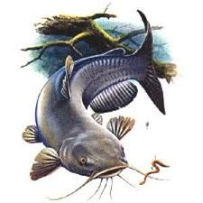 catfish paintings - Google Search