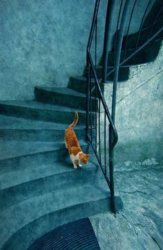 turquoise stairs ♡ teaspoonheaven.com