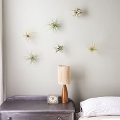Decorating Above the Bed - Living Art With Sculptural Plants