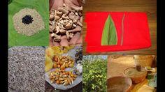 Tribal Medicines of Gandhamardan Hills for Cissus- Betula Toxicity: Film...