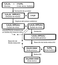 prokaryotae chart // The major characteristics used to