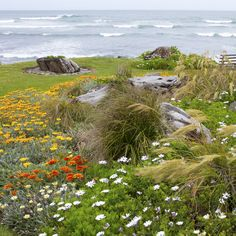 One of the ten new gardens in the festival this year is Coast Haven! #TaranakiGardenFestival #NewPlymouth #NZ'spremiergardenandevents festival