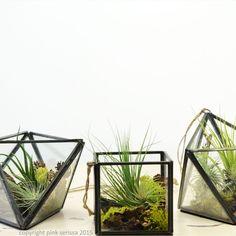 Set of Three Geometric Air Plant Terrariums// by PinkSerissa