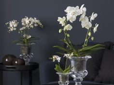 Pynt med orkidéer i alle rom Orchids, Glass Vase, Flowers, Plants, Diy, Home Decor, Yoga, Beach Cottages, Xmas