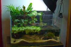 Aquascaping, Aquarium Aquascape, Nano Aquarium, Aquarium Fish Tank, Planted Aquarium, Aquarium Ideas, Cool Fish Tanks, Container Water Gardens, Nano Tank