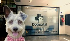 #El primer hospital en España que permite el ingreso de perros - KienyKe: KienyKe El primer hospital en España que permite el ingreso de…