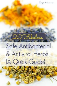 It wasn't until I had my own family, that I really discovered the worth and medicinal value of herbs and the truth of that conviction. After nursing for many years and seeing the downsides of pharmaceuticals, I saw it played out repeatedly. 20 Safe Antibacterial and Antiviral Herbs {A Quick Guide} | Deep Roots at Home