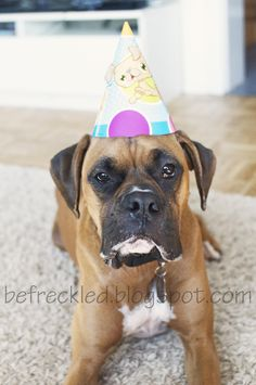 boxer in a birthday hat #boxer #dog