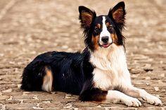 portrait of a dog - http://www.1pic4u.com/blog/2014/09/27/portrait-of-a-dog/