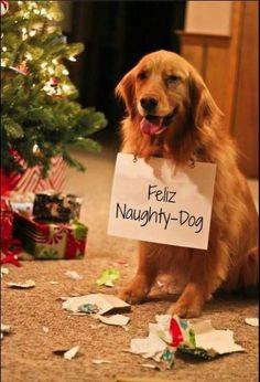Feliz Naughty-Dog!