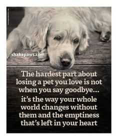 lost of a pet dogs rainbow bridge Dog Loss Quotes, Dog Quotes Love, Losing A Dog Quotes, Sad Quotes, Pet Loss Poems, Lost Dog Quotes, A Girl And Her Dog Quotes, Dog Death Quotes, Quotes About Dogs