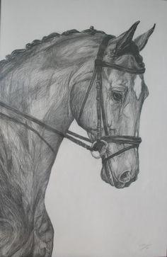 pencil drawings | PENCIL DRAWING: LEARN DRAWING HORSES