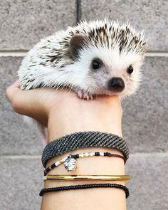 Hedgehog names, baby hedgehog, cutest animals on earth, cute baby animals. Baby Animals Super Cute, Cute Little Animals, Cutest Animals On Earth, Animals And Pets, Cute Animal Videos, Cute Animal Pictures, Cute Animals With Funny Captions, Funny Animals, Baby Hedgehog