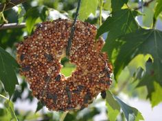 Got stale Bagels?  Slice and cover with natural peanut butter then dip in wild bird seed.  Tie to a branch in your garden with cotton string.