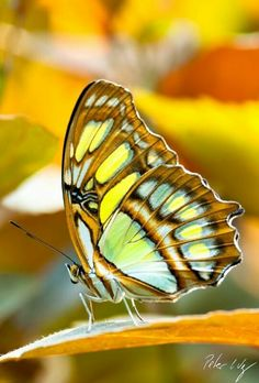 Gorgeous Butterfly..