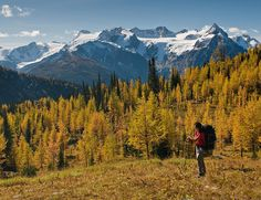 Imagine mountains dripping in gold! Join us for a healthy vacation of Nordic Fitness Trekking in the mountains of British Columbia. Now booking October 2016.