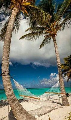 Palmen met hangmat