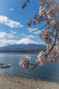 Classic view of Mt.Fuji with sakura in bloom by Julia Wimmerlin