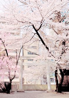 ♡ Princess of Paris ♡ Beautiful World, Beautiful Places, Sakura Bloom, Pink Aesthetic, Adventure Is Out There, The Places Youll Go, Pretty Pictures, Pretty In Pink, Scenery
