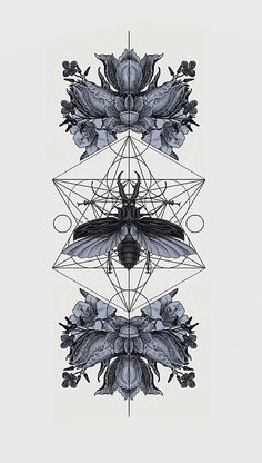 Interesting Insect studies 'The Panoply Plates' by Hannes Hummel