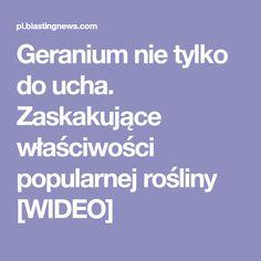 Geranium nie tylko do ucha. Zaskakujące właściwości popularnej rośliny [WIDEO]