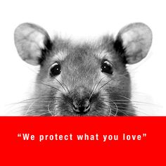Swissinno produces high quality and top European products for natural pest control. Love, Nature, Animals, Amor, Naturaleza, Animales, Animaux, El Amor, Animal Memes