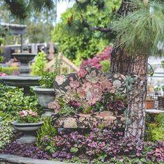 Roger's Gardens (@rogersgardens) • Instagram photos and videos Rogers Gardens, Garden Shop, Garden Styles, Garden Inspiration, Gardening, Display, Photo And Video, Celebrities, Spring