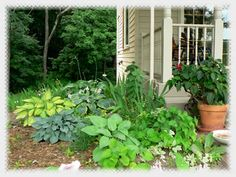 15 North Side Of House Landscaping Ideas Landscape Plants Shade Garden