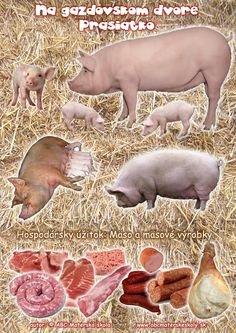 Úloha - Na gazdovskom dvore - farebná predloha LICENCIA Science Art, Science And Nature, Farm Animals, Animals And Pets, Carne, Kids, Farmhouse, Animals, Blue Prints