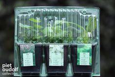 De blisters zijn gemaakt van een onder andere een natuurlijke vorm van plastic en bestaat uit biopolymer. De verpakkingen worden door de natuur afgebroken. De technologie maakt voor het basismateriaal gebruik van grondstoffen zoals mais in plaats van aardolie. Anders gezegd: schaarse hulpbronnen worden door onuitputtelijke bronnen vervangen. Ingeo™ is geschikt voor alle wegwerpsystemen en is bovendien composteerbaar. Het is afkomstig uit de aarde en wordt daarin ook weer opgenomen. Glass Vase, Home Decor, Decoration Home, Room Decor, Interior Decorating