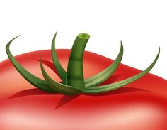 How to Illustrate a Tomato in Adobe Illustrator - Illustrator ...