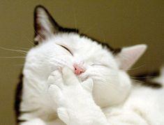 口を押さえて笑う猫