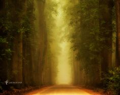 Miss T by Lars van de Goor - Photo 119484827 - 500px