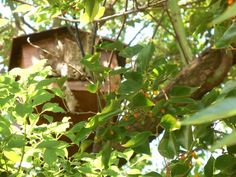 Bee removal in Johannesburg , removed bees in a tree in an AWOL box in Allendale road