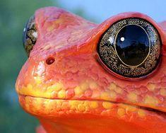 Завораживающие фотографии животных (43 фото)