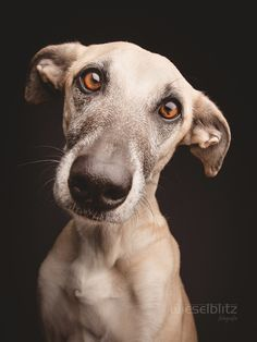 "Try to say ""No"" to this face by Elke Vogelsang on 500px"