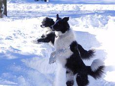 Tess & Bella having fun in the snow!