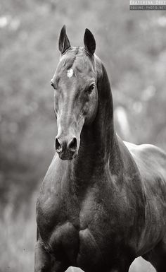 Black and White - Equine Photography by Ekaterina Druz