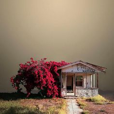Oh MY!! The Light in this Photo is Phenomenal...this Abandoned House looks Surreal and Gorgeous!!  :)  {Ed Freeman photographer}