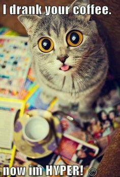 Kitty..I drank ur coffee... Now I'm Hyper
