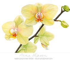 """Phalaenopsis Detroit © 2009 ~ annamasonart.com ~ 36 x 48 cm (14"""" x 19"""")"""