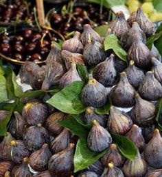 Guide-to-Growing-Figs