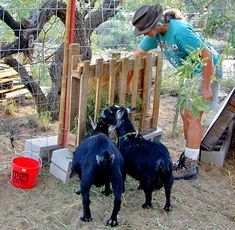 Turn a wood pallet into a hay rack for your goats! Remove the middle boards from the back of the pallet and attach a piece of plywood across the back of the pallet. Attach a wood beam along the bottom