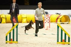 Dog Agility How Do Agility Competitions Work? Cat Care Tips, Dog Care, Pet Tips, Dog Kennel Designs, Dog Playground, Dog Rooms, Large Dog Breeds, Obstacle Course, Dog Agility