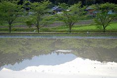 菰野町西菰野地区 水田に映る風景  H25年4月25日夕刻撮影